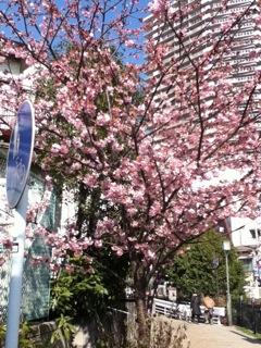 春が来てます